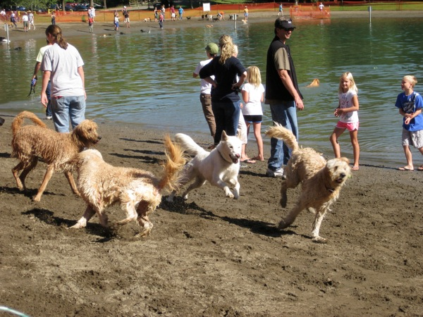 Water dogs having a blast in Spring Lake Park