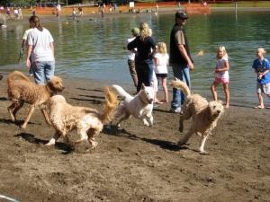 water-bark-dogs.JPG