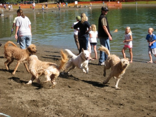Wet & happy dogs