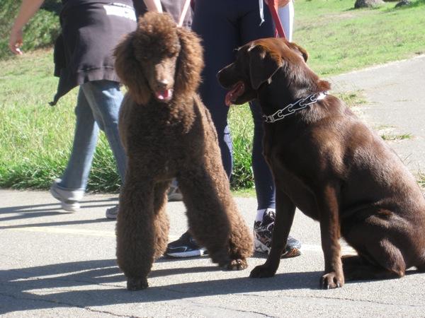 Chocolate-dogs.JPG