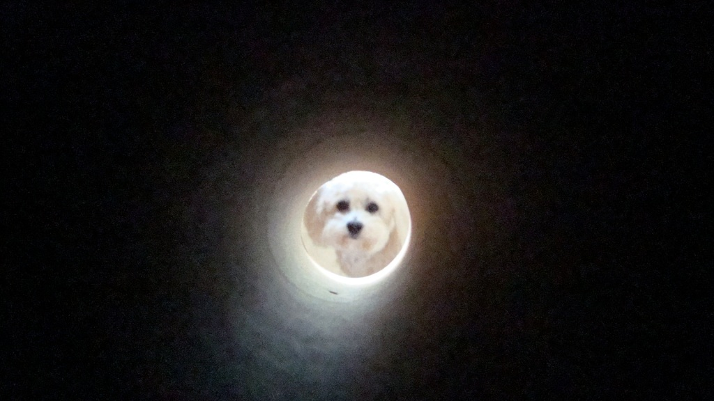 The Dog in the Moon