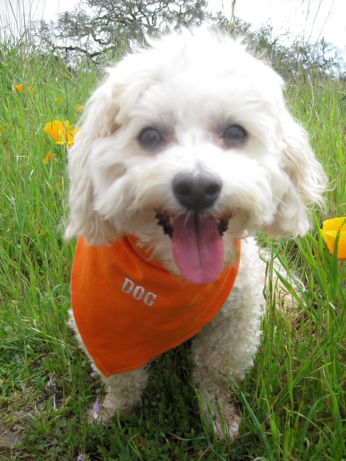 Orange you gonna take me for a walk?
