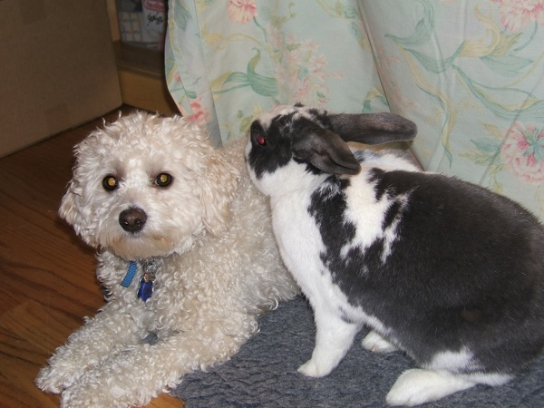 Our dog, Sydney & rabbit, Paris
