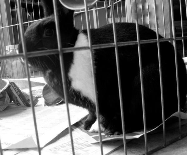 Black  White Tux