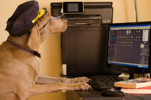 dog reads his blog