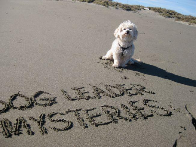 Beach loving dog.