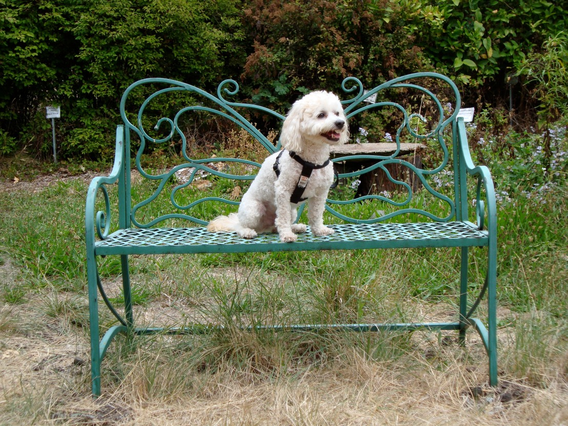 Sid on bench