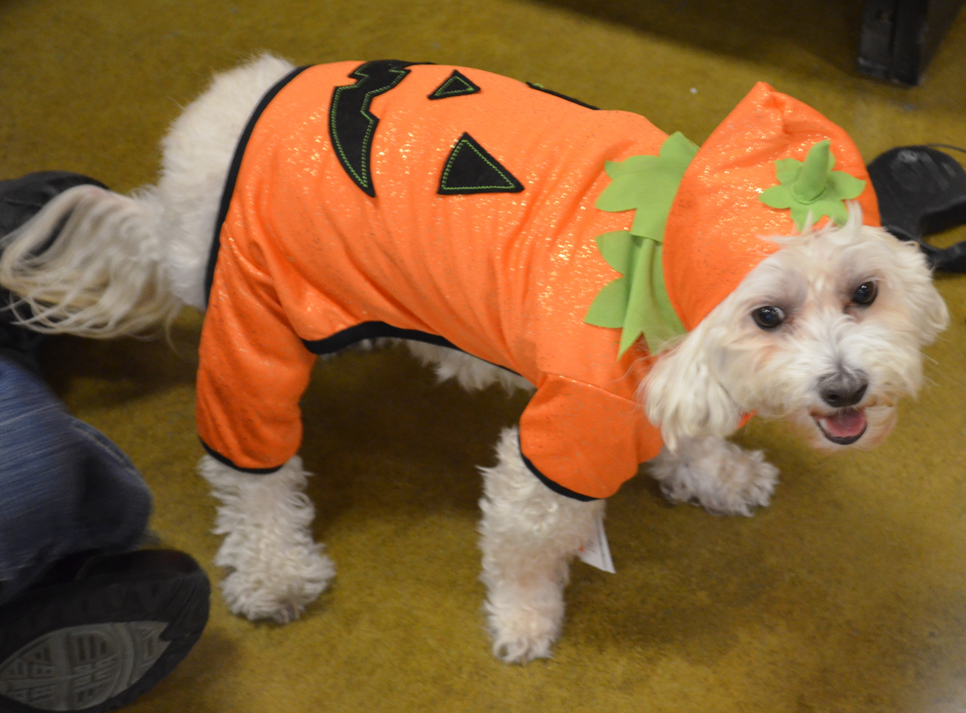 Pet Humor | Dog Leader Mysteries