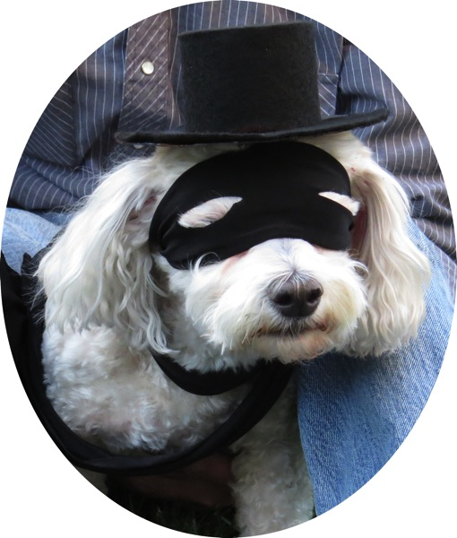Any other Zorro fans out there? Send cookies, please.