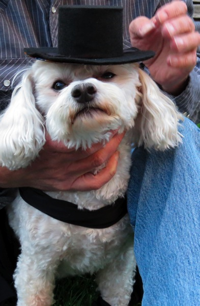Zorro's dog in black hat
