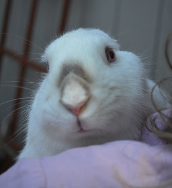 Yoshi a rabbit without a home