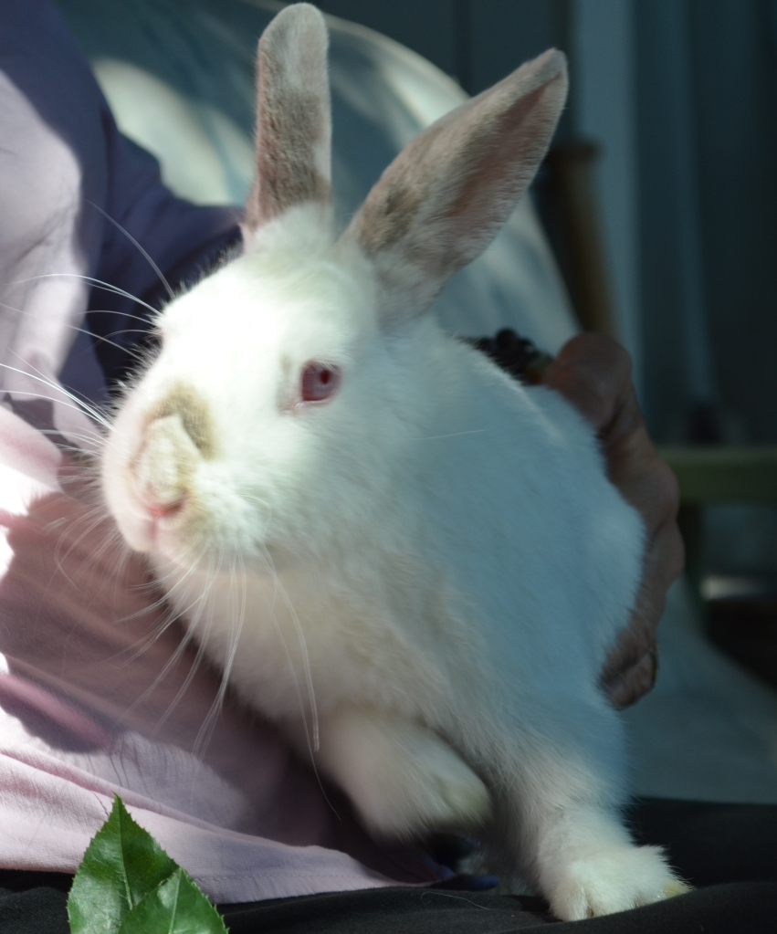 Rabbits' health suffers when neglected.