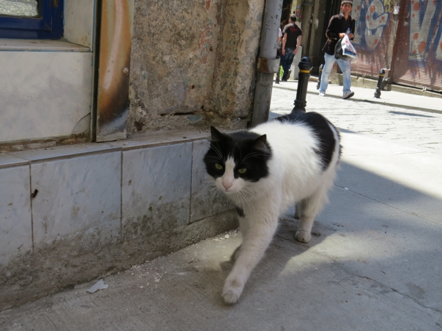 Hunting Cat, Istambul, Turkey