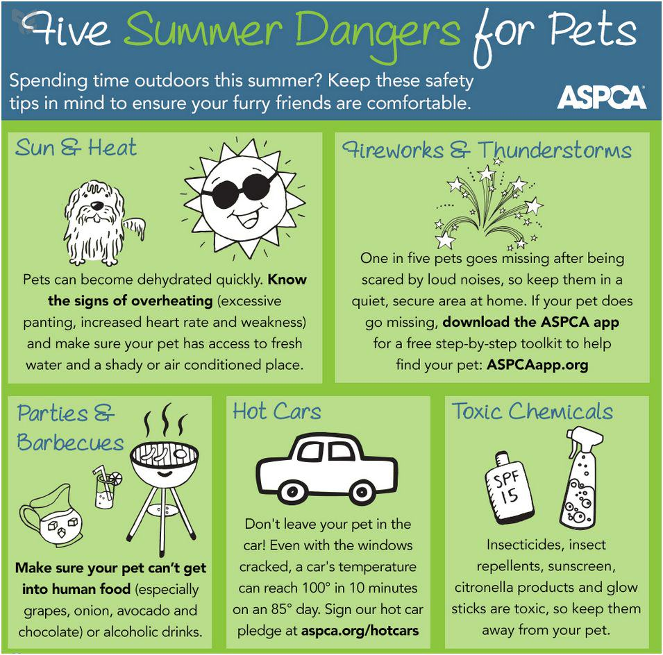 Summer can be deadly 4 dogs.