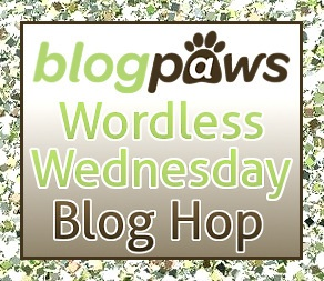 Wordless Wednesday
