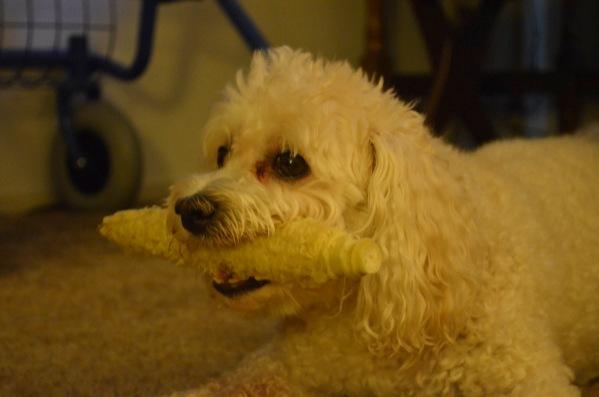 1 corn dog