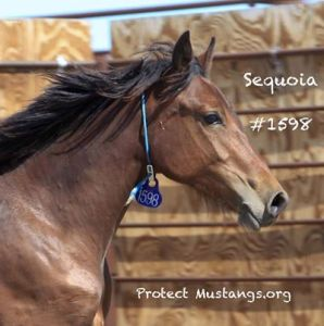 Her brown coloration dived her from the adoptable horses.
