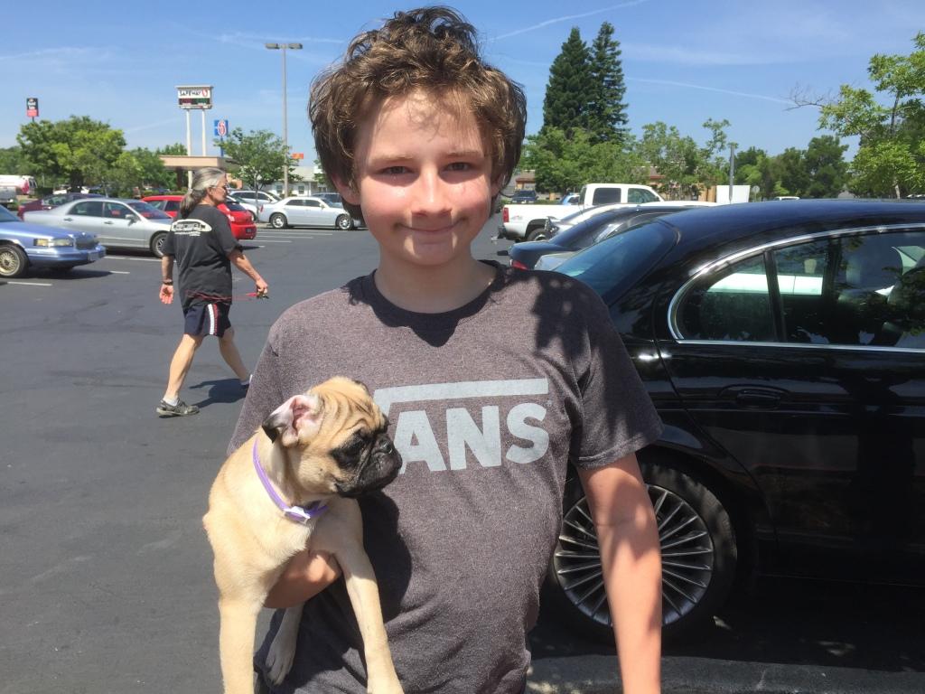 Pug puppy & boy
